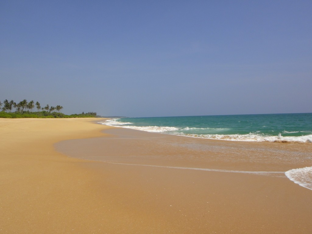 Marakolliya Beach. Photo by Karen Martinedale.